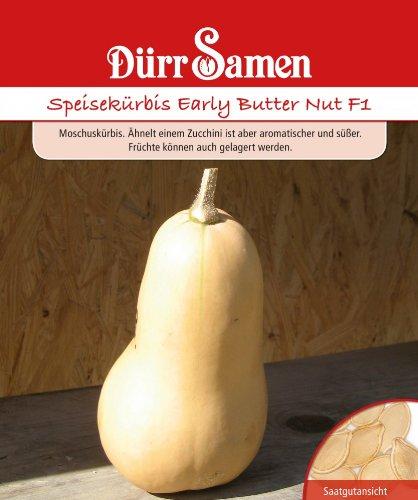 Dürr Samen 0914 Speisekürbis Early Butter Nut F1 (Speisekürbissamen)