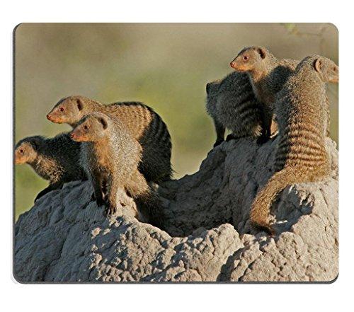 banded-mongoose-family-basking-on-a-termite-mound-etosha-national-park-namibia-mouse-pad