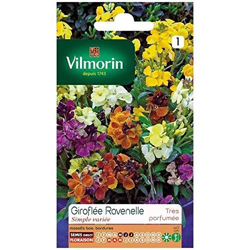 Vilmorin - Sachet graines Giroflée Ravenelle simple variée
