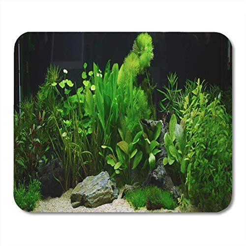 Deglogse Gaming-Mauspad-Matte, Underwater Fish Plant Aquarium Aquascaping Tank Cichlid River Ada Mouse Pad, Desktop Computers mats - Tank Ada