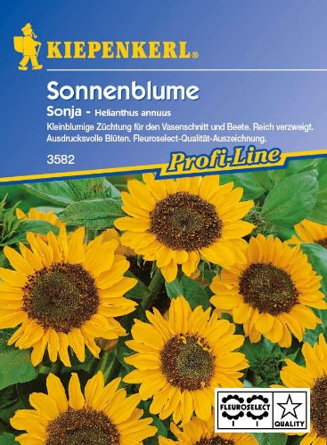 Sperli Blumensamen Sonnenblume Sonja, grün