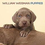 William Wegman Puppies 2020 Wall Calendar