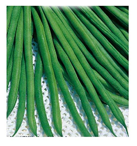 inception pro infinite 200 c.ca semi fagiolo nano scylla - phaseolus vulgaris - in confezione originale - prodotto in italia - fagioli - fg010
