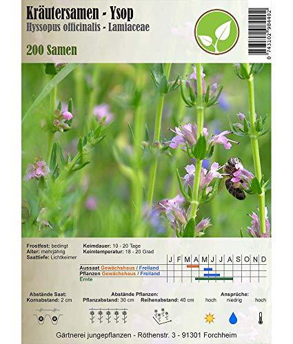 Kräutersamen - Ysop - Hyssopus officinalis - Lamiaceae 200 Samen