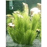 Miss-an Aquarium Dekorationen 3Pcs Fisch Pflanzen Aus Seide Stoffe Kunststoff, Ungiftig Und Sicher für Alle Fisch&Pets Tank Künstliche Grüne Wasser