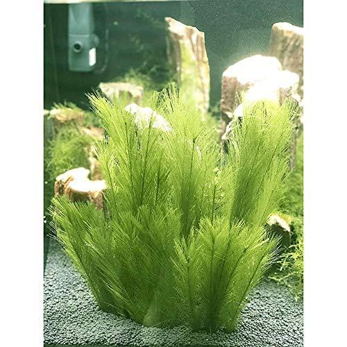 Miss-an Aquarium Dekorationen 3Pcs Fisch Pflanzen Aus Seide Stoffe Kunststoff, Ungiftig Und Sicher für Alle Fisch&Pets Tank Künstliche Grüne Wasser (Pflanzen Können)