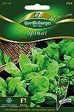 Spinat Emilia von Quedlinburger Saatgut