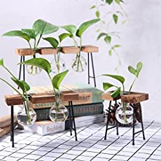 Ocamo Fashionable Transparent Glass Vase with Wooden & Iron Stand for Water Planting Decoration Gift
