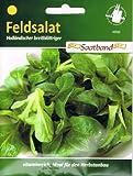 Feldsalat Holländischer breitblättriger Saatband