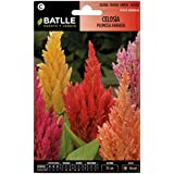 Semillas de Flores - Celosía variada - Batlle