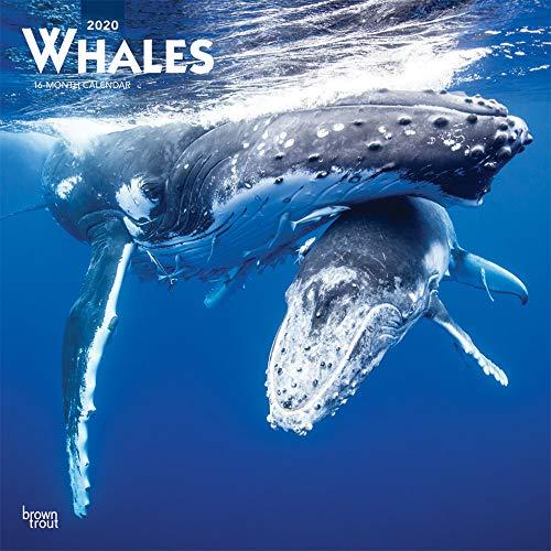 Whales - Wale 2020 - 16-Monatskalender: Original BrownTrout-Kalender [Mehrsprachig] [Kalender] (Wall-Kalender)