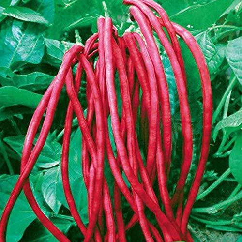 Semi di Fagioli Lunghi 10g Serpente/Yard-Long Fagioli Asparagi Red Noodle Pole Bean Garden Vegetable Organic Green Fresh Chinese Seeds (Red)