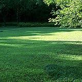 Tinement Samen - Grassamen Bodendecker Rasensamen Teppichverbene Summer Pearls Ziergras Saatgut Immergrün robust Blumensamen Winterhart Mehrjährig (50pcs)