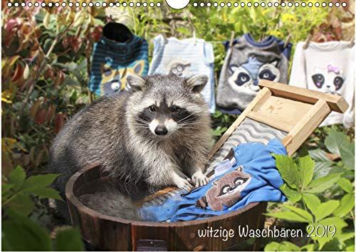 Witzige Waschbären 2019 (Wandkalender DIN A3 quer)