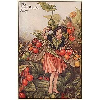 Black Bryony Fairy by Cicely Mary Barker. Autumn Flower Fairies, print c1935