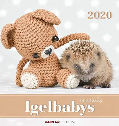 Igelbabys 2020 - Postkartenkalender (16 x 17) - Hedgehogs - zum aufstellen oder aufhängen - Geschenkidee - Tierkalender - Gadget