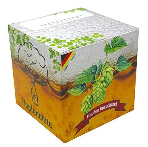 Geschenk-Anzuchtset Hopfenblüte - Echter Brauhopfen - Männergeschenk - Hopfen Samen Anzuchtset - Geschenk für Bierliebhaber - witziges (Kasten Kostüm Mann)
