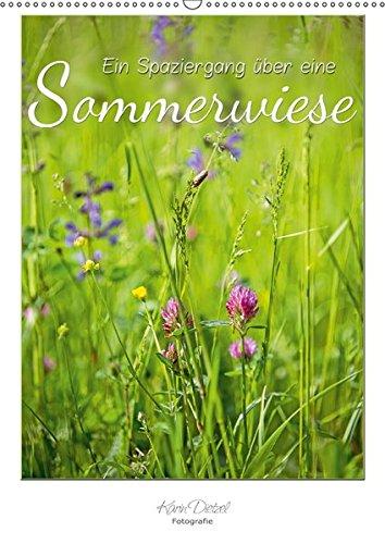 Ein Spaziergang über eine Sommerwiese (Wandkalender 2019 DIN A2 hoch): Sommerwiesen sind Farbe, Licht, Leben (Monatskalender, 14 Seiten ) (CALVENDO Natur)
