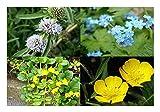 ZAC Wagner gemischtes Pflanzensortiment mit 25 Pflanzen Teichpflanzen Teichpflanze Teich