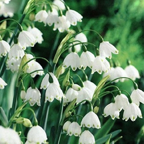 Wolds Collection Plants, Seeds & Bulbs - Best Reviews Tips