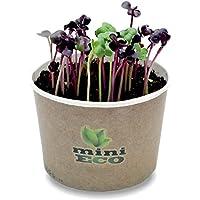 MiniEco Ravanello Rosso Rambo Rafano Frondoso Micro Verdure Semi per Germogli. Circa 600 Semi, 6g. Fai Crescere Le tue Erbe Fresche sul Davanzale Sementi Germinali Microgreens