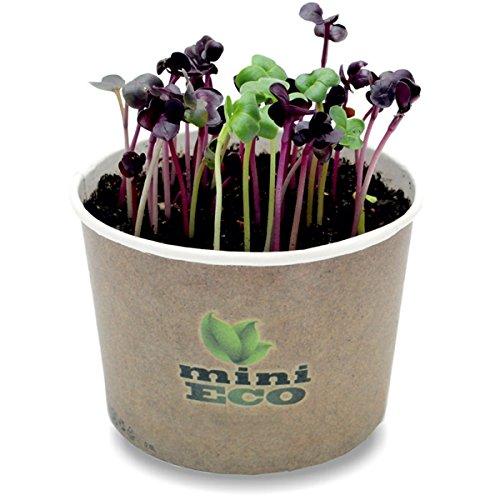 MiniEco Radis Rambo Rouge Micro-pousses Graine à Germer Bio. Environ 600 Graines, 6g. Les graines germées et Jeunes pousses. Kit de Culture d'herbe. Légume Végétal Microgreens