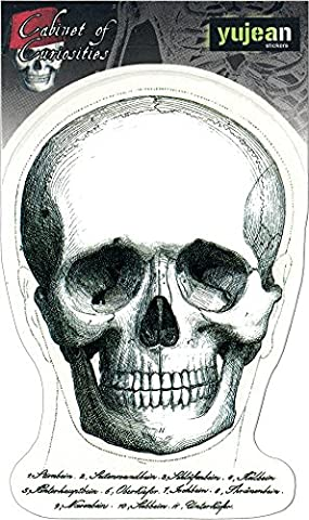 CABINET OF CURIOSITIES SKULL FACE - 3.625