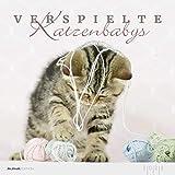 Verspielte Katzenbabys 2020 - Kittens - Bildkalender (33 x 33) - Tierkalender - Wandkalender: by Natalie Eckelt