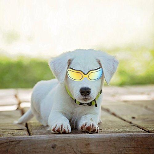 Thmyo Hund Sonnenbrille, Verstellbar UV-Schutz Winddicht Wasserdicht Pet Schwimmbrille für Medium/Klein Hunde und Katzen