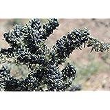 Vendita calda !!! Confezione originale 20 semi/pacchetto, semi di bacche di Goji, nero bacca di goji, erbe rare wolfberry semi