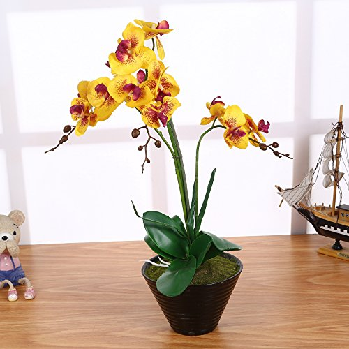 Deko Orchideen Mehr Als 20 Angebote Fotos Preise