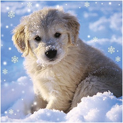 Me To You Up Close Golden Retriever Puppy Christmas Snow Greeting Card