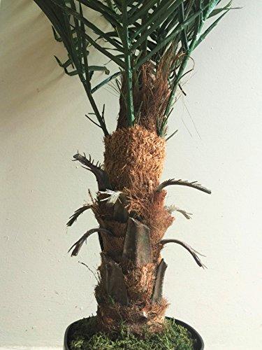 Best Artificial 120 cm große Künstliche Phönix-Palme, tropische Pflanze für Büro/Wintergarten