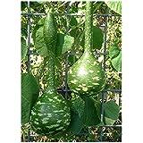 TROPICA - calabaza - gigantesca - calabaza botella (Cucurbita lagenaria) - 15 semillas