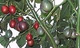 Albero Pomodoro, tamarillo, ricco di vitamina C, ricco raccolto, super delizioso dolce-Saur