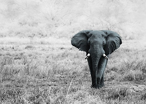 Artis 607942, diseño de Elefantes en la Sabana impresión Sobre Cristal, 45...