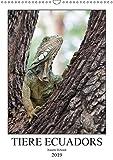 Tiere Ecuadors (Wandkalender 2019 DIN A3 hoch): Die faszinierende Tierwelt Ecuadors (Monatskalender, 14 Seiten ) (CALVENDO Tiere)