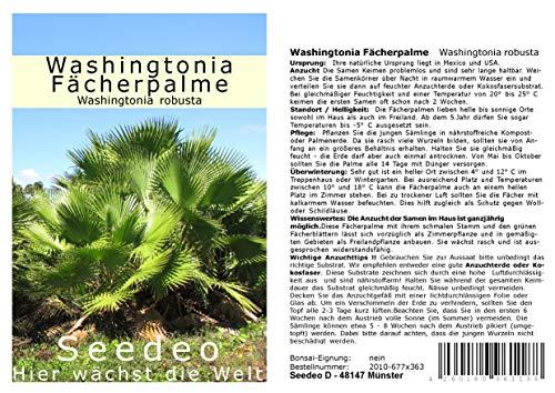 faecherpalme winterhart Seedeo® Washingtonia - Fächerpalme (Washingtonia robusta) 12 Samen