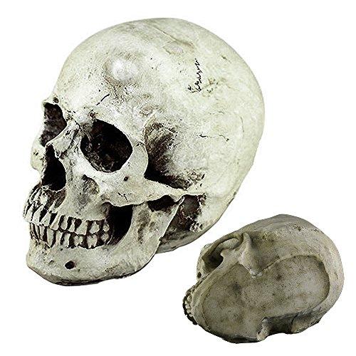 Totenschädel Halloween Deko Totenkopf Dekoration Skelett Dekoration