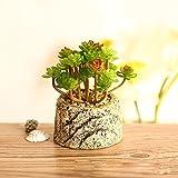 Beito Topf Garten Ornamente Bonsai kreative Pflanzen Simulation Keramik Vasen fleischigen Schreibtisch, Seerose kleine Runde Porzellan Becken