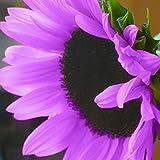 FOReverweihuajz 100Pcs Blumen Blume gelbes grün Haus Garten ornament Pflanze