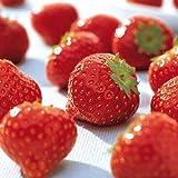 Besser Erdbeeren; 1000 g -