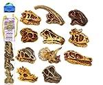 Safari 687404 Toy Dinosaur Skulls