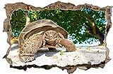 Schildkröte Natur Tier Wandtattoo Wandsticker Wandaufkleber D1097 Größe 40 cm x 60 cm
