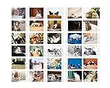 Weiß-Karton-Packung von 30 Postkarten Schöne Katzen-Thema-Postkarte