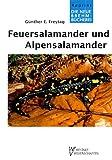 FEUER - U. ALPENSALAMANDER