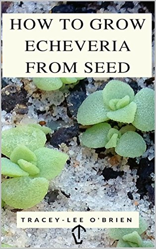 How To Grow Echeveria From Seed (English Edition)