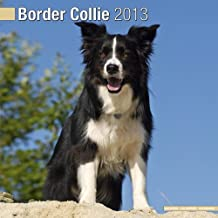 Border Collie W 2013