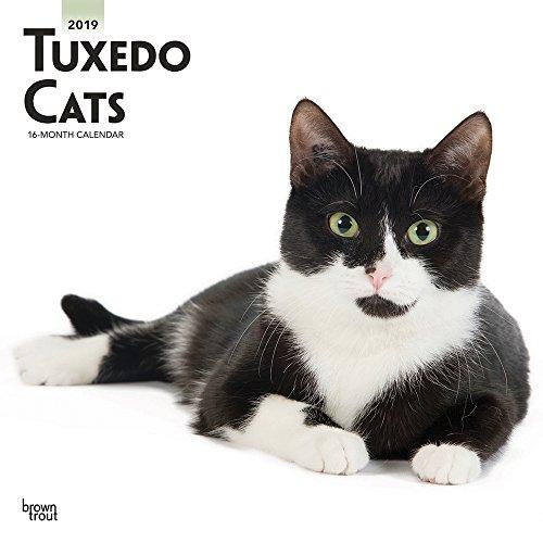 Tuxedo Cats - Tuxedo-Katzen 2019 - 18-Monatskalender (Wall-Kalender)