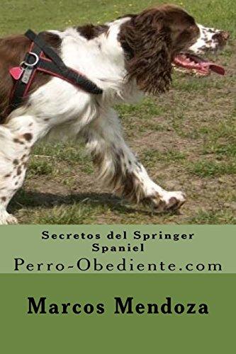 Secretos del Springer Spaniel: Perro-Obediente.com